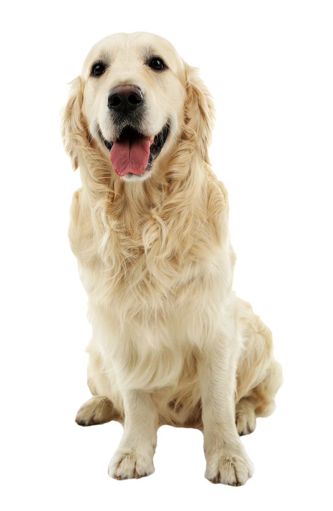 The dog spa dog grooming services for your best friend for A cut above pet salon